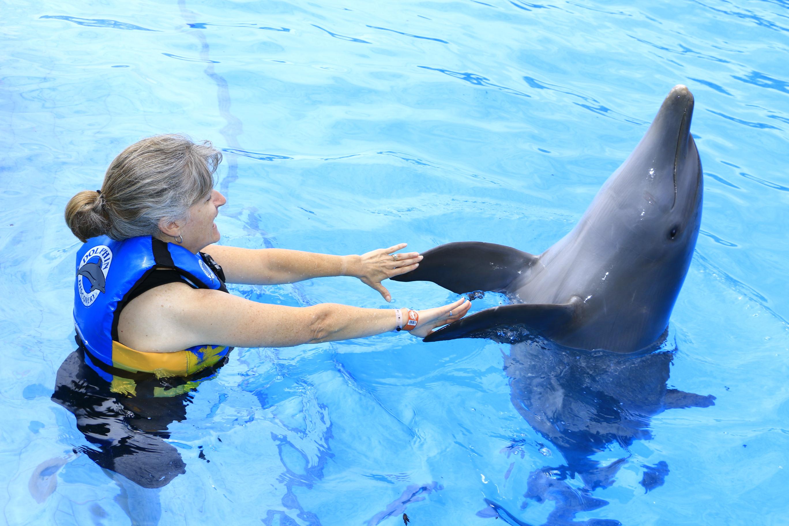 dolphin2
